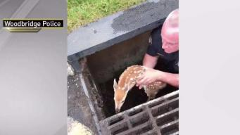 NJ Police Officer Saves Baby Deer in Drain