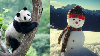 Can You Find the Panda Among the Snowmen?