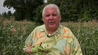 Produce Pete: Corn