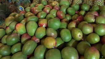 Produce Pete: Green Mangoes