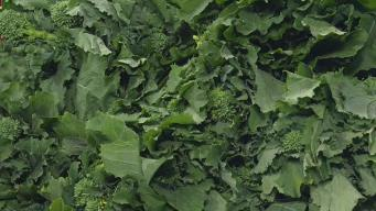 Produce Pete: Broccoli Rabe