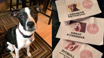 Having a 'Breed Reveal Party' for Your Rescue Dog