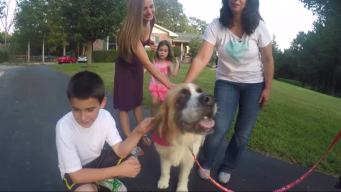 Long Lost Service Dog Comes Home