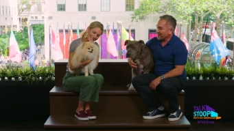Cesar Millan Helps You With Your Pooch Problems