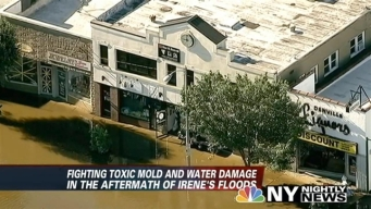 Watch Out for Mold After Irene