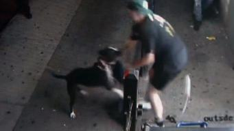 Video Shows Dog Attacking 2 Women in Queens