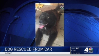 Nosy Dog Gets Head Stuck Under Car