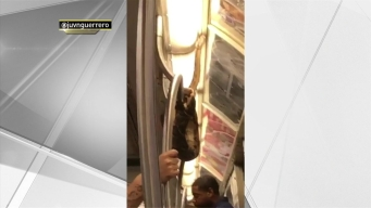 Video Shows Snake on Subway Train in NYC