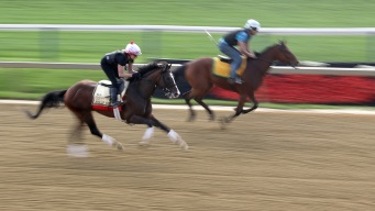 Tough, Talented War of Will Looks to Wow in Preakness