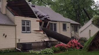 What to Do If Your Tree Damages Property