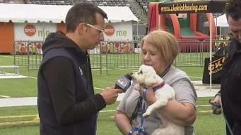 Health Expo: Why Pets Can Be Good For Your Health