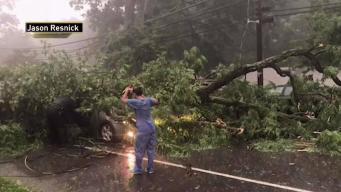 Woman Rescued After Tree Falls on Car