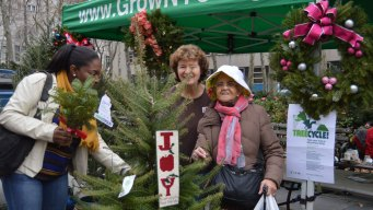 Small Farmers Take Root In Competitive NYC Xmas Tree Market