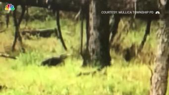 Alligator on the Loose in New Jersey