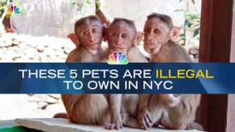 These 5 Pets Are Banned in NYC