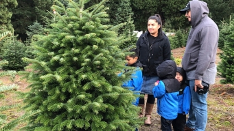 Here's Where Most Christmas Trees in the U.S. Grow