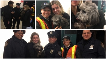 Pooch Rescued From Subway Tracks, But Snarls Service