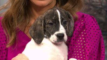 Clear the Shelters: Hawaii & Cupid
