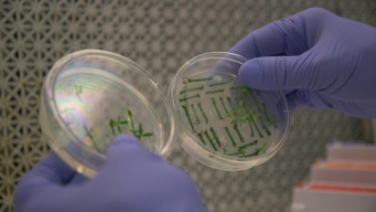 Gene-Edited Food Is Coming, Regulatory Questions Remain