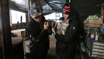 Gus Kenworthy Adopts Puppy From South Korea Dog Meat Farm
