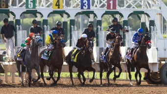 Horse Racing Plays Catch-Up on Concussion Protocol