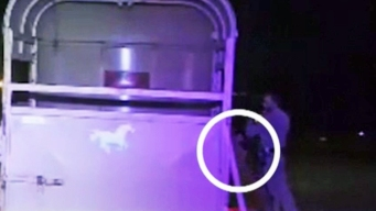 Lemur Jumps Out of Trailer During Bizarre Highway DUI Stop