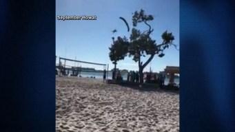 Skydiving Santa Hits Tree, Breaks Leg