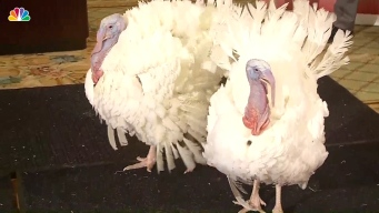 Turkeys Drumstick, Wishbone to Get President Trump's Pardon