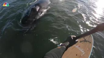 NJ Paddleboarder's Incredibly Close Encounter With Whale