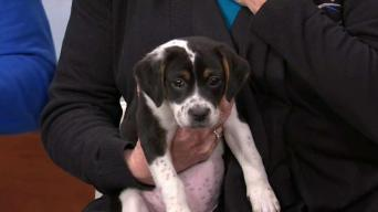 Adopting From North Shore Animal League America