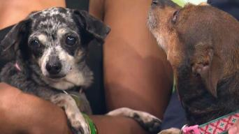 Clear The Shelters: Serena and Venus