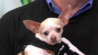 Clear The Shelters: Poncho and Brooklyn