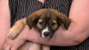 New York Live Pet Projects - NBC New York