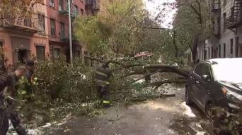 Dozens of Trees Downed in Storm