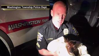 NJ Cop Saves Baby Deer by Performing Emergency C-Section