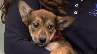 Clearing the Shelters with North Shore Animal League America