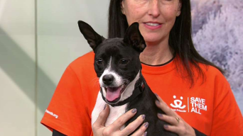 Clear the Shelters with Foster, Clarabelle & Friends