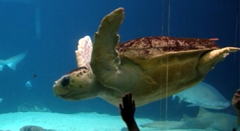 Friday Field Trip: New York Aquarium