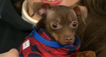 Clear the Shelters with Little Shelter