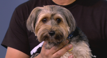 Clear The Shelters: Buddy & Poncho