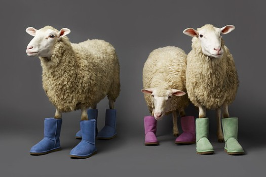 Ugg Sues Emu Over Trademark; Emu Fires Back