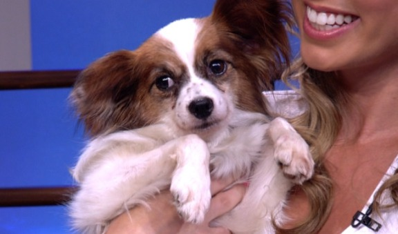 Animal Haven: Adopt These Cute Pups