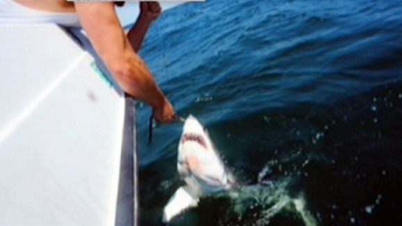 Exclusive video great white shark caught off nyc coast nbc new york exclusive video great white shark caught off nyc coast publicscrutiny Gallery
