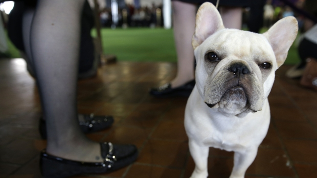 New York City's Most Popular Dog Breeds