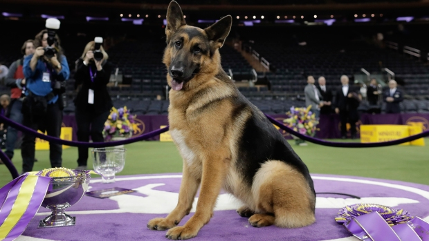 [NATL] Watch: Rumor the German Shepherd Wins Best in Show