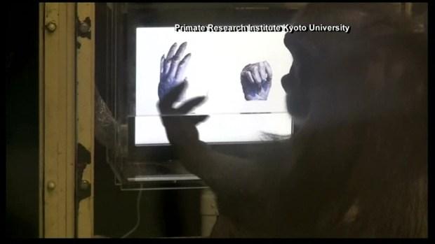 investigate research paper