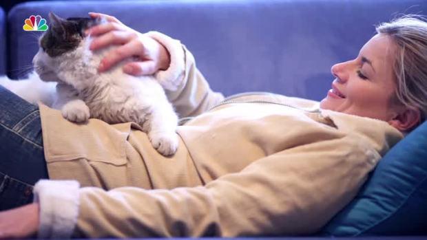 Do Cats Actually Love Their Humans?