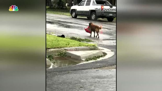 [NATL] The Story Behind the Hurricane Harvey Viral Dog Photo