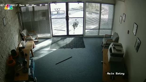 [NATL] Goat Rams Through Glass Door of Colo. Business