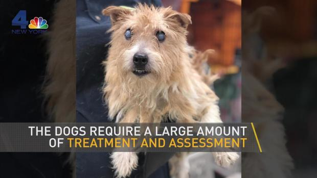 [NY] 20 Dogs Found Dead, Nearly 200 Rescued From NJ Nightmare